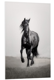 PVC print  Horse Friesian in the steppe - Monika Leirich