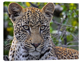 Canvas print  The leopard - Africa wildlife - wiw