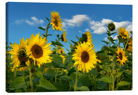 Canvas print  Sunflowers - Atteloi