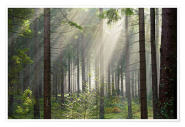 Premium poster Sun rays in the forest