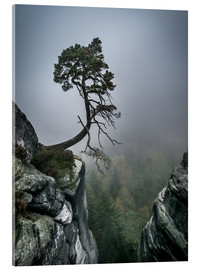 Acrylglas print  Lonely Tree on the Brink - Andreas Wonisch