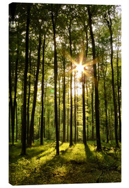 Canvas print  Forest in Sunset - Renate Knapp