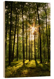 Hout print  Forest in Sunset - Renate Knapp