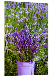 Acrylglas print  Lavender in metal bucket - Thomas Klee