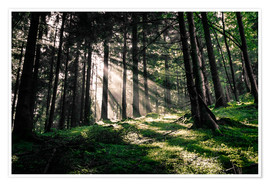 Premium poster Light rays in the forest