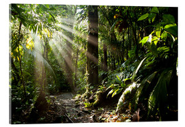 Acrylglas print  Jungle light - Peter Schickert