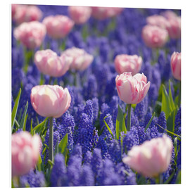 PVC print  meadow of tulips - pixelliebe
