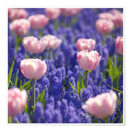 Premium poster  meadow of tulips - pixelliebe
