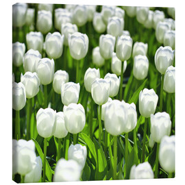 Canvas print  Meadow of tulips - pixelliebe