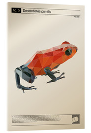 Acrylglas print  fig5 Polygonfrosch Poster - Labelizer