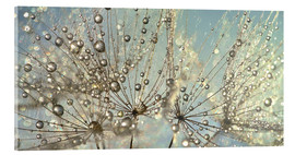 Acrylglas print  Dandelion Magic Raindrop - Julia Delgado