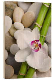 Hout print  Bamboo and orchid - Andrea Haase Foto