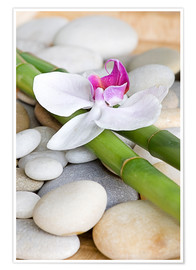 Premium poster  Bamboo and orchid II - Andrea Haase Foto