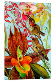 Acrylglas print  Exotic birds on orchids