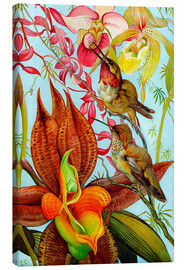 Canvas print  Exotic birds on orchids