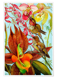 Premium poster  Exotic birds on orchids
