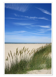 Premium poster Summer beach grass