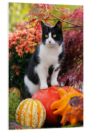 PVC print  Tuxedo cat on colourful pumkins in a garden - Katho Menden