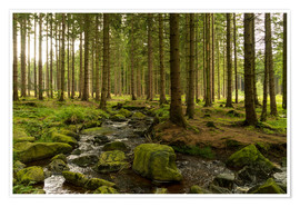 Premium poster forest with creek