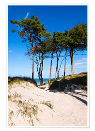 Premium poster Baltic sea - Wstern beach close to Ahrenshoop