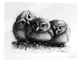 Acrylglas print  Three young owls - owlets - Stefan Kahlhammer