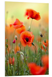 PVC print  Poppies 22 - Nailia Schwarz