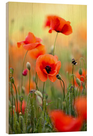 Hout print  Poppies 22 - Nailia Schwarz