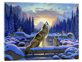 Acrylglas print  Wolf learns the howling - Chris Hiett