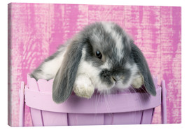 Canvas print  Rabbit in a flower pot - Greg Cuddiford