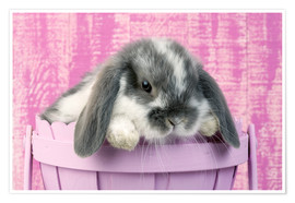 Premium poster  Rabbit in a flower pot - Greg Cuddiford