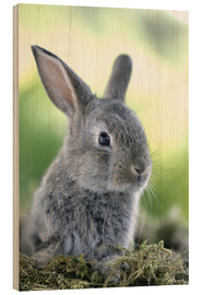 Hout print  Grey rabbit - Greg Cuddiford