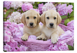 Canvas print  Labrador puppies in a basket - Greg Cuddiford