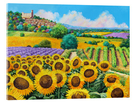 Acrylglas print  Vineyards and sunflowers in Provence - Jean-Marc Janiaczyk