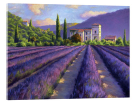 Acrylglas print  Lavender field with Abbey - Jay Hurst
