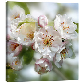 Canvas print  Cherry Blossom - Simon Kayne