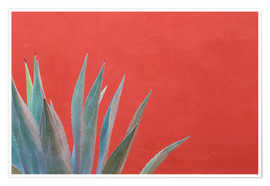Premium poster  Agave in front of red wall - Don Paulson