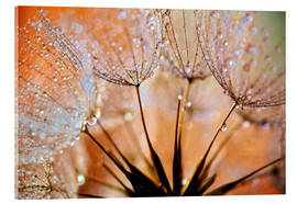 Acrylglas print  Dandelion orange light - Julia Delgado