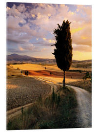 Acrylglas print  Evening in the Val d'Orcia, Tuscany - Matteo Colombo