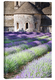 Canvas print  Senanque abbey and lavender, Provence - Matteo Colombo