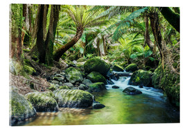 Acrylglas print  Rainforest in Tasmania - Matteo Colombo