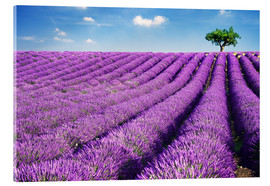 Acrylglas print  Lavender field and tree - Matteo Colombo