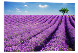 PVC print  Lavender field and tree - Matteo Colombo
