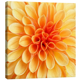 Canvas print  Yellow Dahlia - Martina Cross