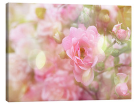 Canvas print  Romantic Rose - Martina Cross