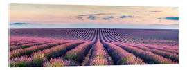 Acrylglas print  Lavender field in Provence - Matteo Colombo