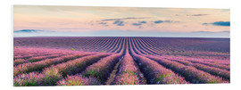 PVC print  Lavender field in Provence - Matteo Colombo