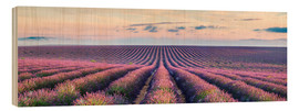Hout print  Lavender field in Provence - Matteo Colombo