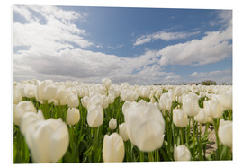 PVC print  White tulip fields - George Pachantouris