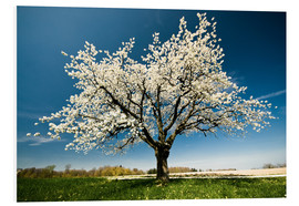 PVC print  Single blossoming tree in spring - Peter Wey