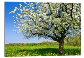 Aluminium print  Blossoming trees in spring rural meadow - Peter Wey